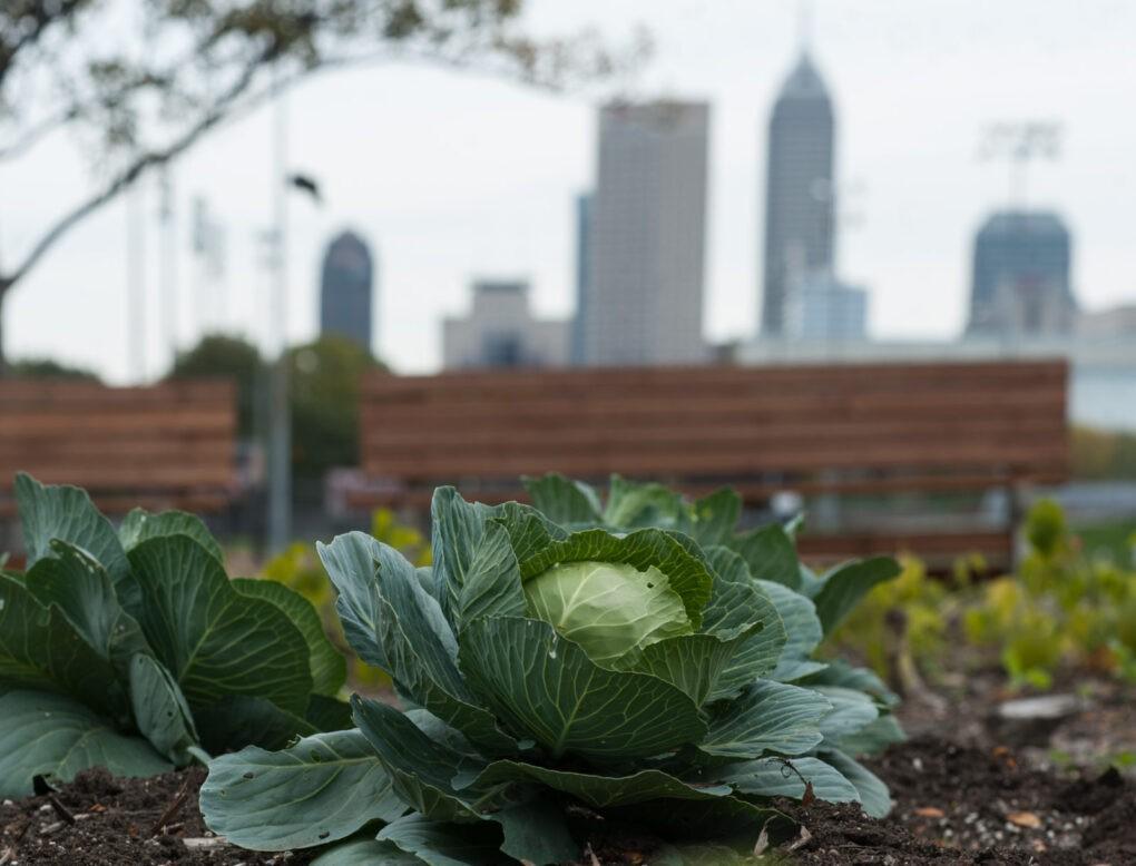 Growing the Urban Garden
